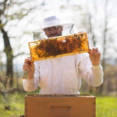 Dan looking at a beehive frame