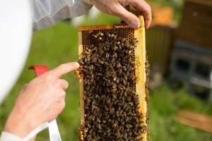 Learn to understand bees at our beekeeping training course