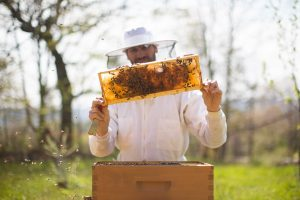 Dan during the beekeeping training course