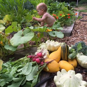 Baby playing in the vegetable garden surrounded by harvest