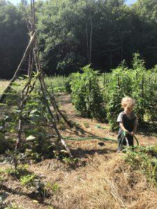 Child watering the vegetable garden