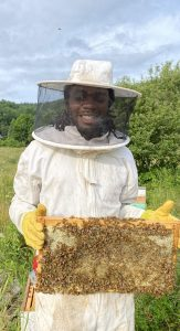 Tailor learning to keep bees