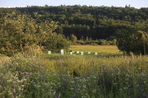 Diversified pastures and apiary at Beavertides Farm