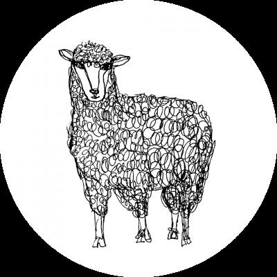 Shop Grassfed Lamb
