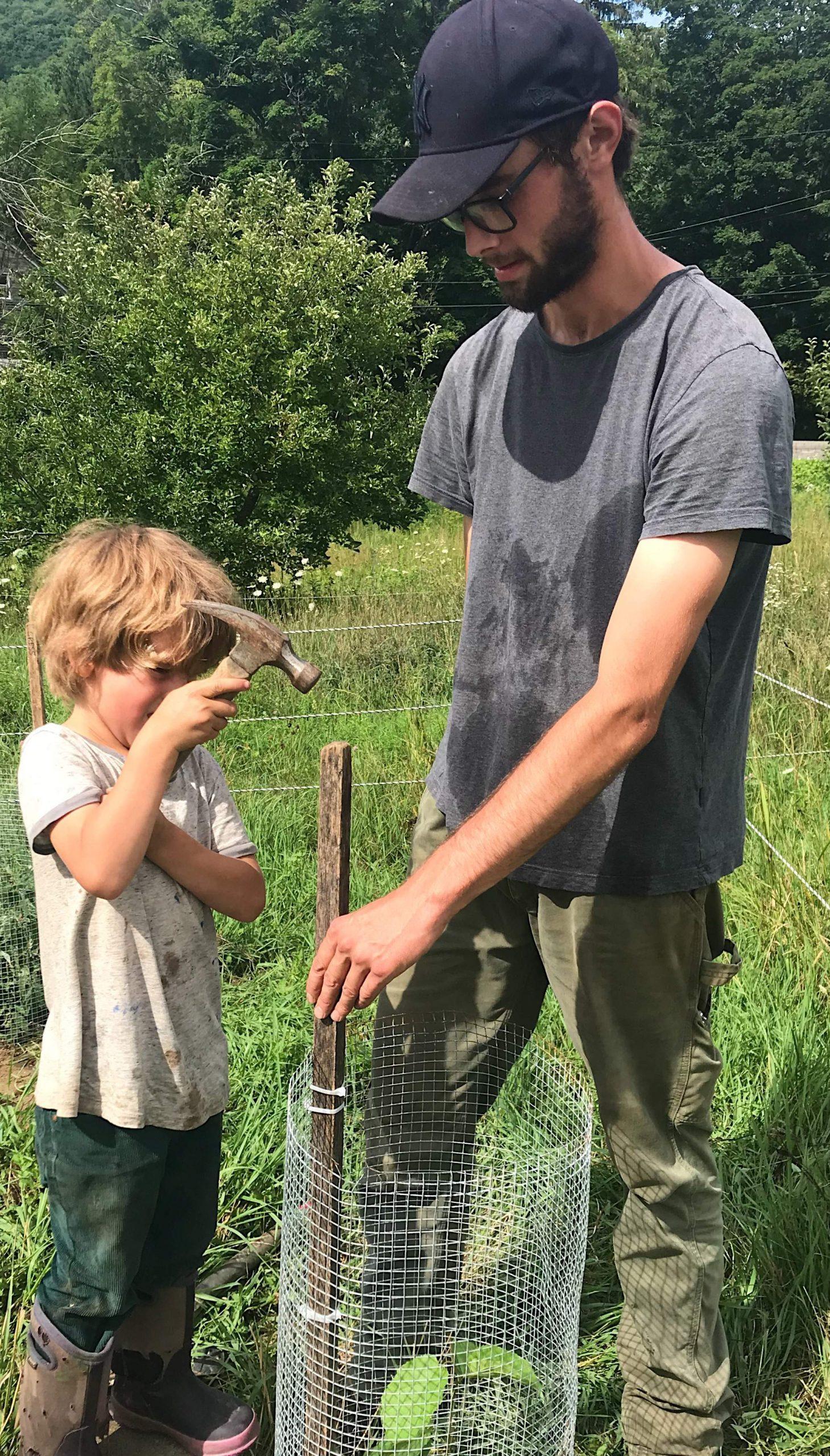 Jake planting hazelnuts