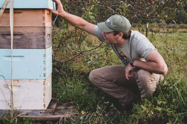 Dan checking a beehive