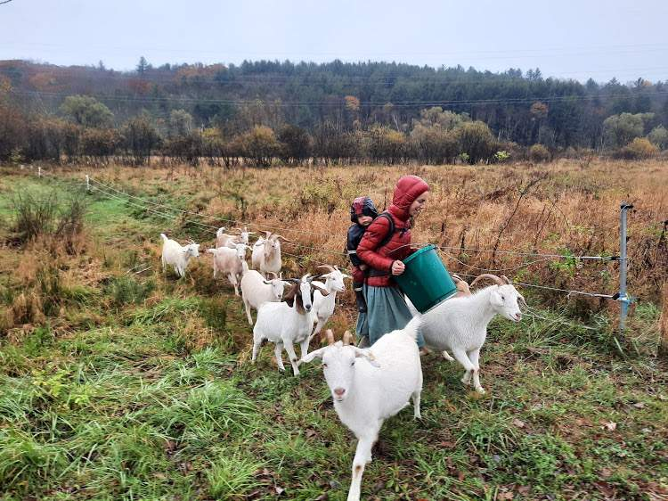 Moving the goats