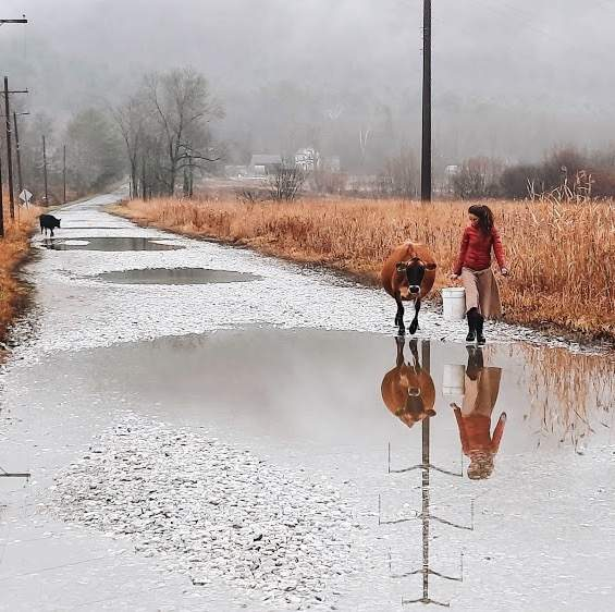 Woman and cow walking over a flooded road
