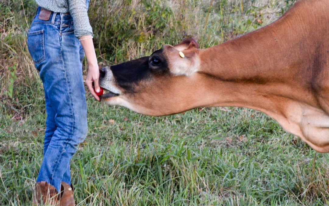 Night Weaning Calves And Toddlers