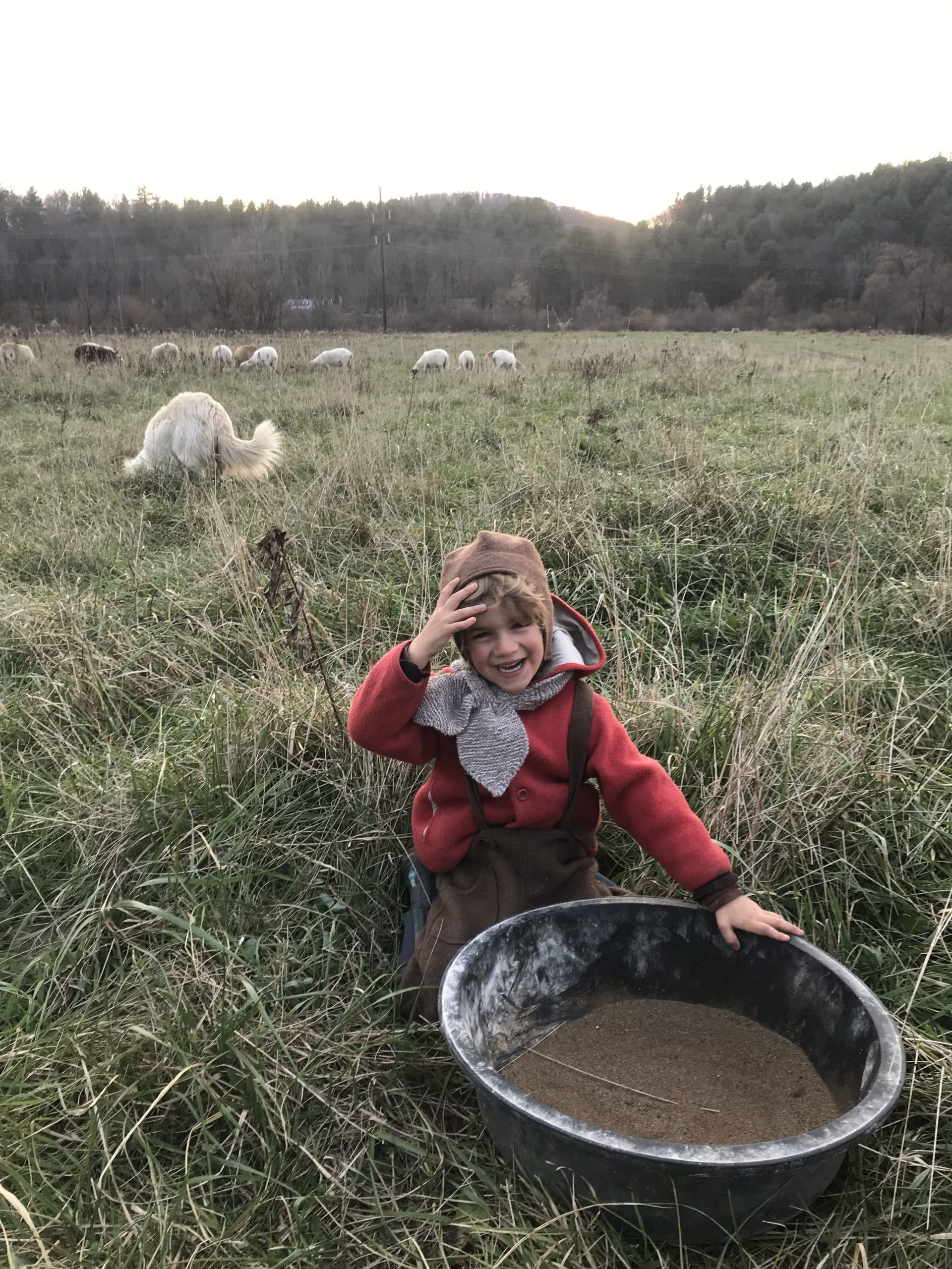 Boy feeding sheep minerals in field