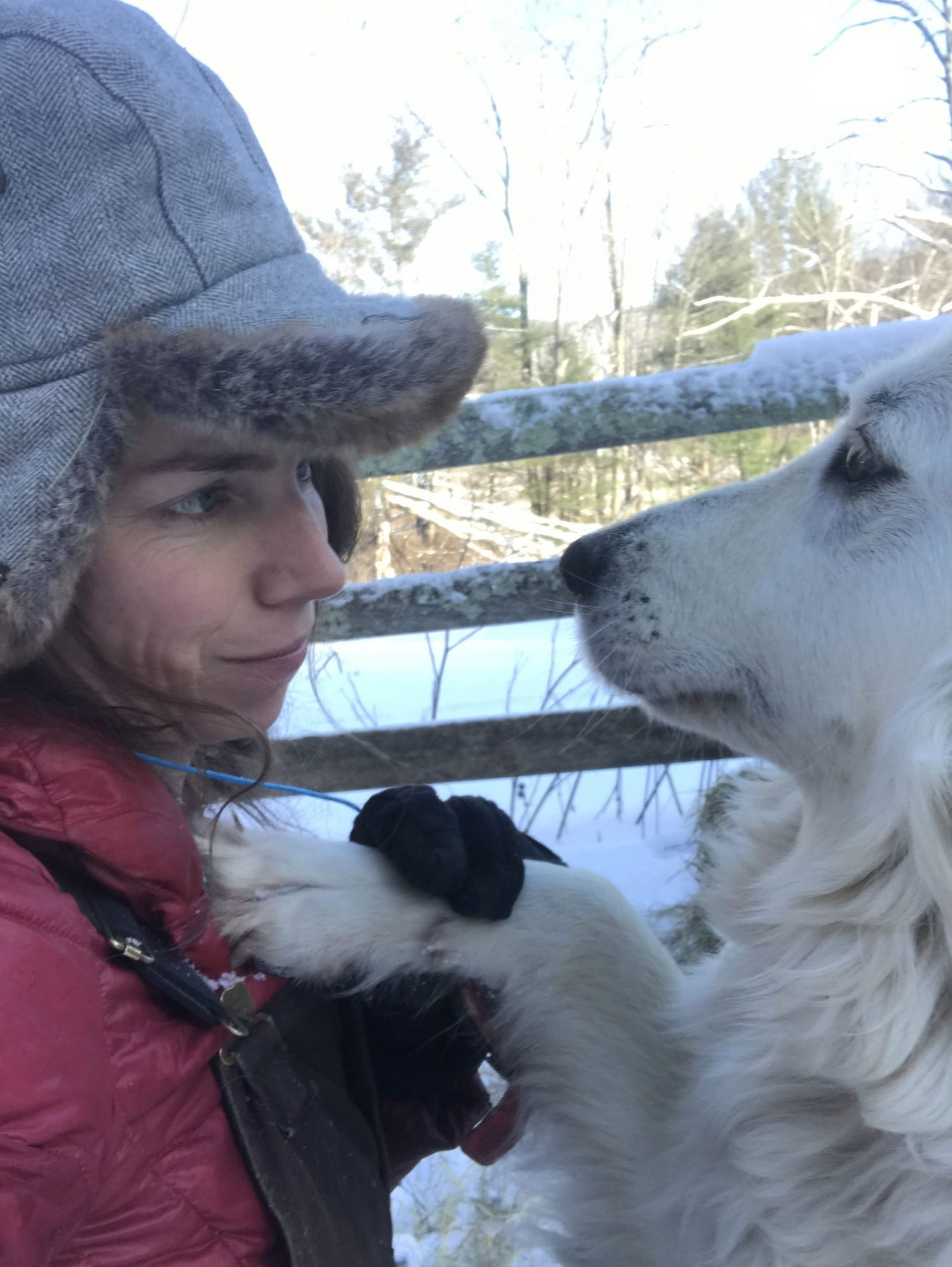 Big white dog putting his paw on womans shoulder in snow