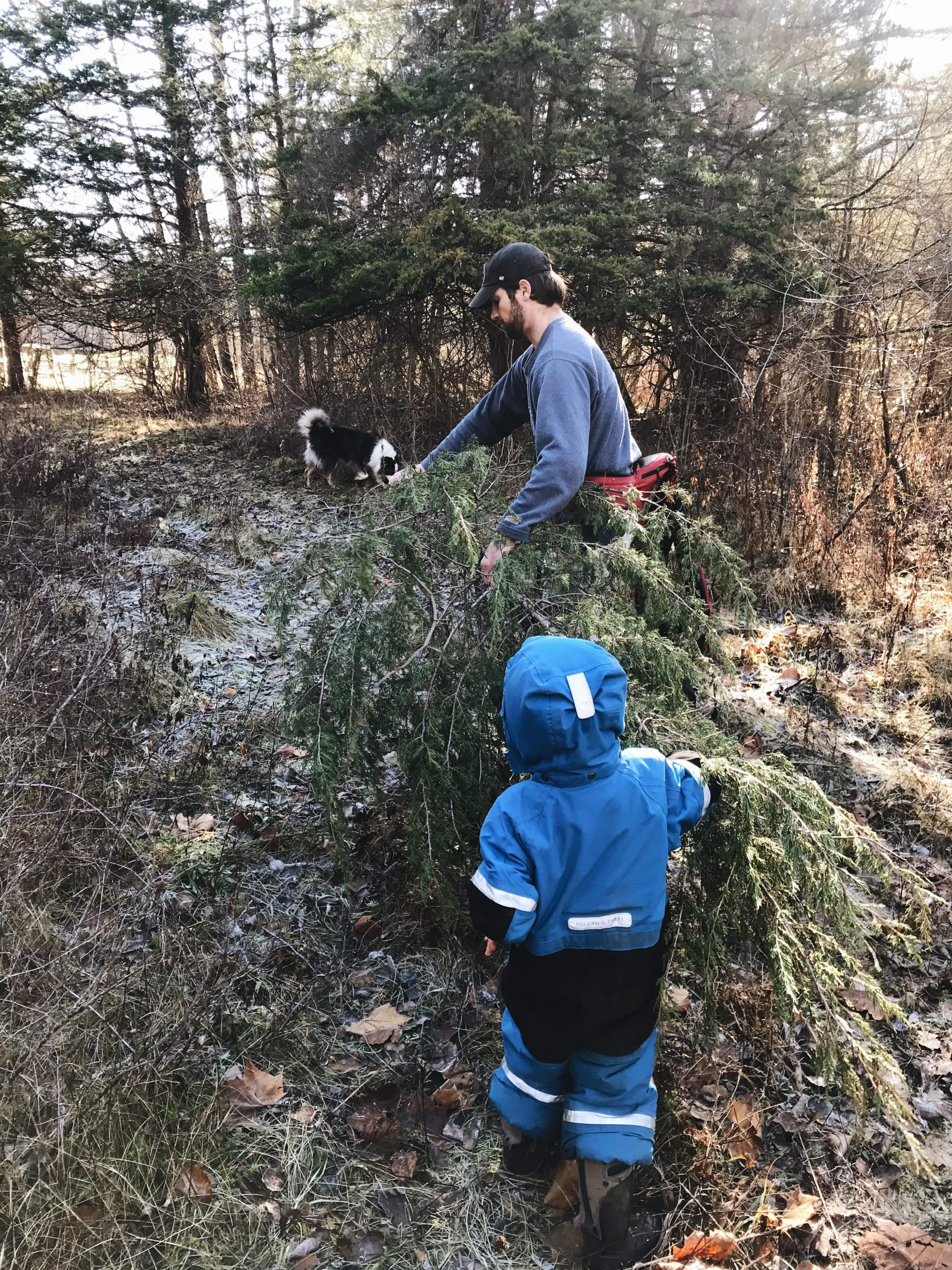 Father and son carrying Christmas tree out of the woods