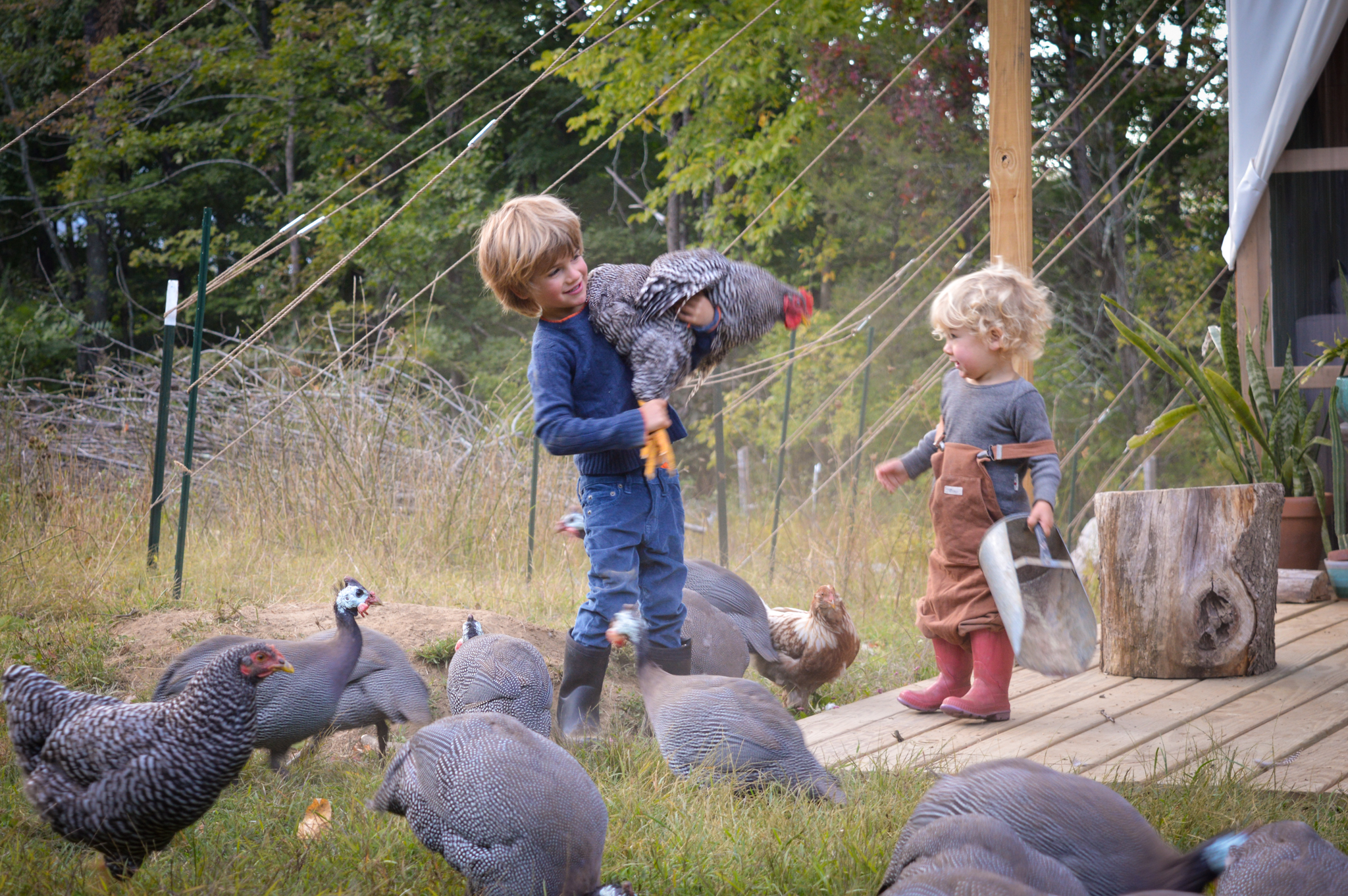 Little one holding a backyard layer chicken in the pasture