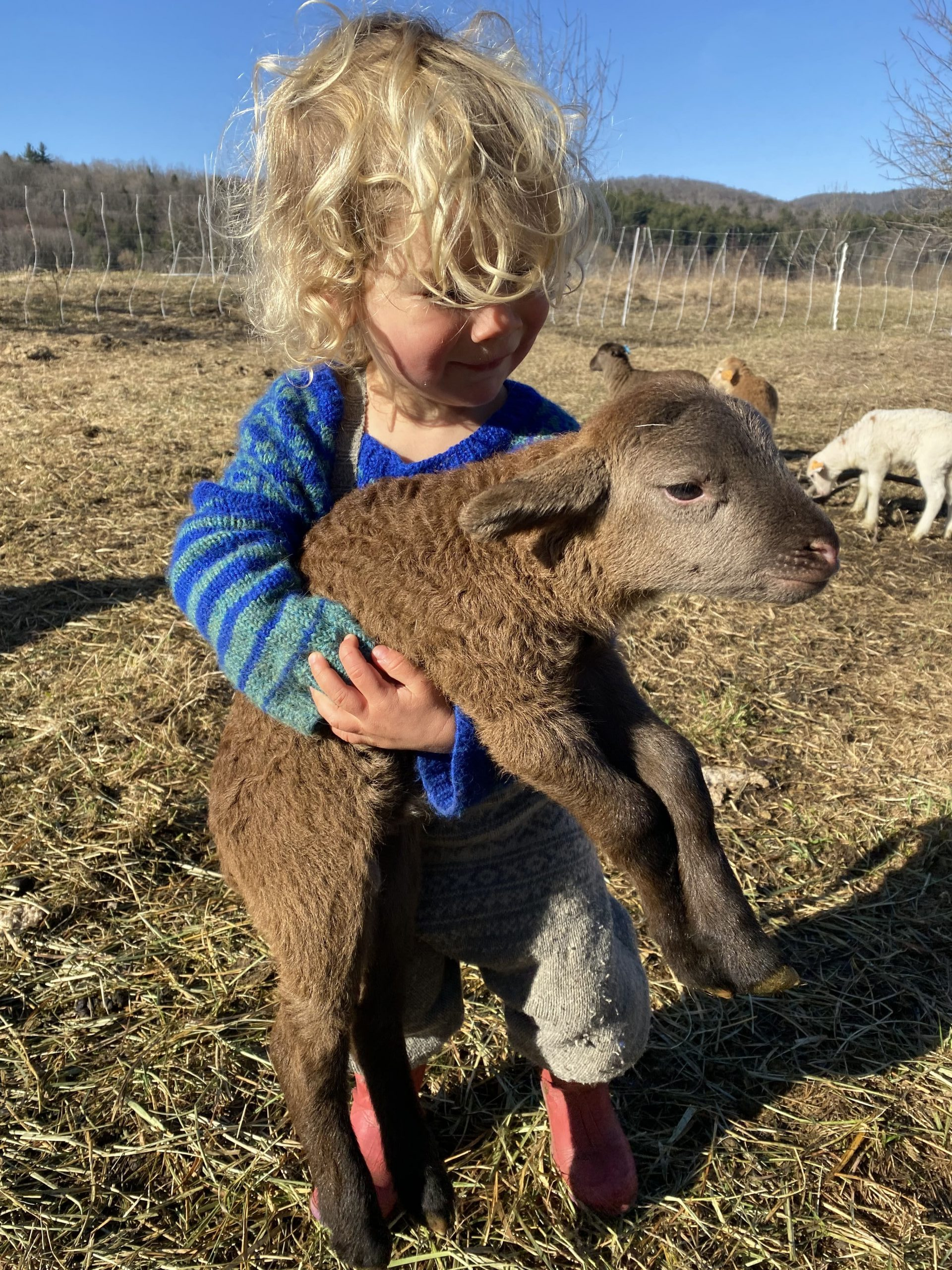 kid and lamb