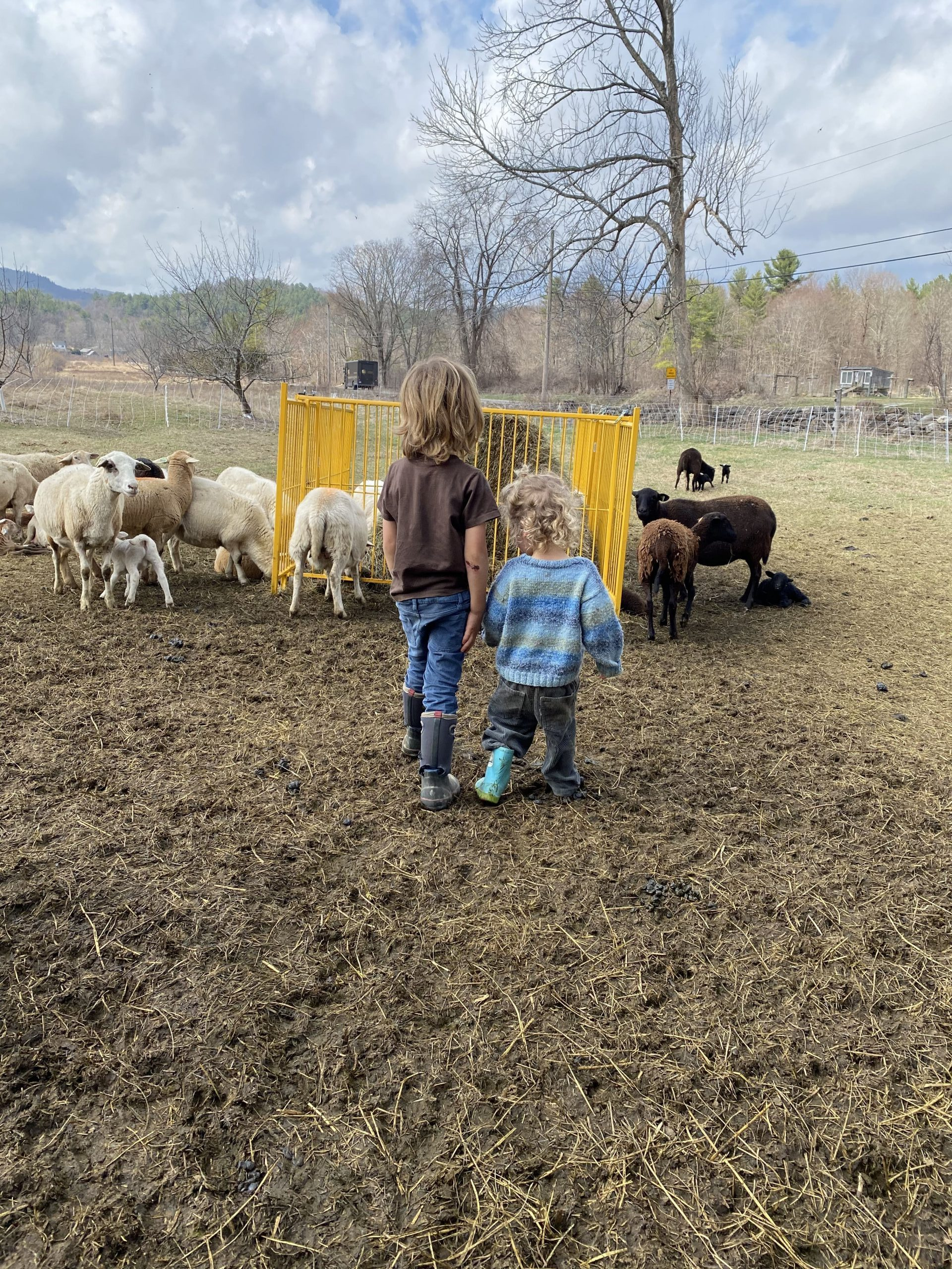 Kids in the lambing pasture