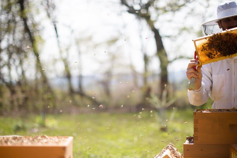 Beekeeping in connecticut