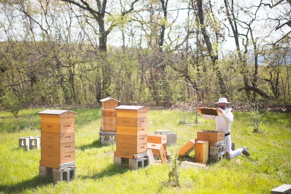 connecticut apiary
