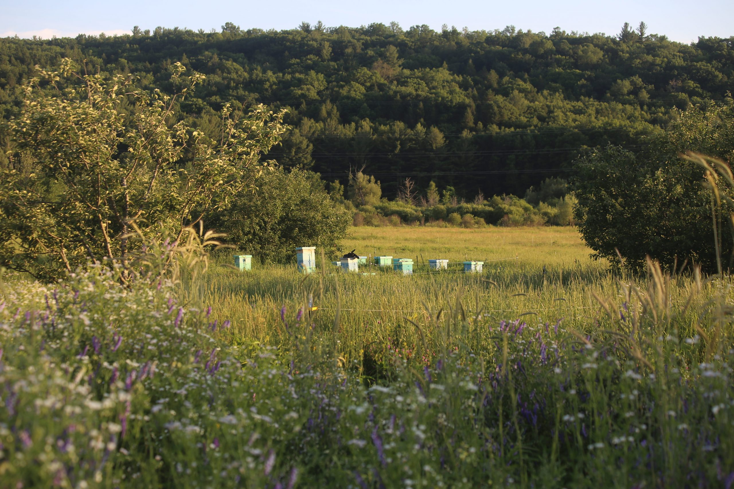 Our apiary in Connecticut